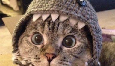Геном кішок розповів історію їх «одомашнення»