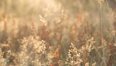 Синоптики дали прогноз на сентябрь