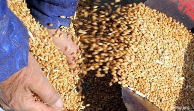 Украина экспортировала 16 млн тонн зерновых