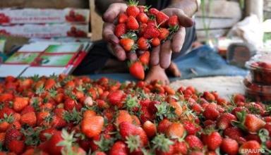 Украина рекордно нарастила экспорт ряда продуктов