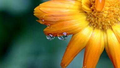 Погода в Украине на выходные: дожди начинают сдавать позиции