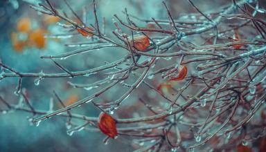 Антициклон Oldenburgia несет в Украину холод и морозы: синоптик рассказала о погоде до конца недели