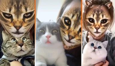 Кошачьи фильтры на лицо довели до ужаса реальных питомцев (видео)