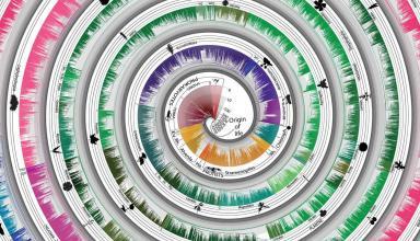 Нове древо життя включить «сімбіомів» як окремі організми