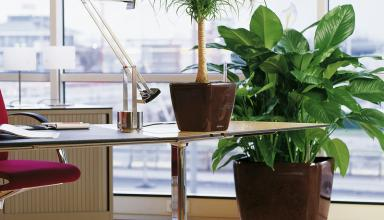 Выбор комнатных растений для офисных помещений