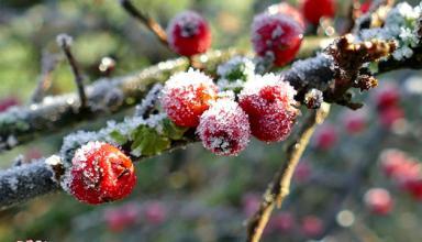 В Украину идут дожди и ночные морозы